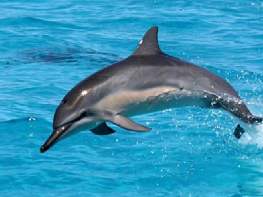 rencontre avec dauphins ile maurice